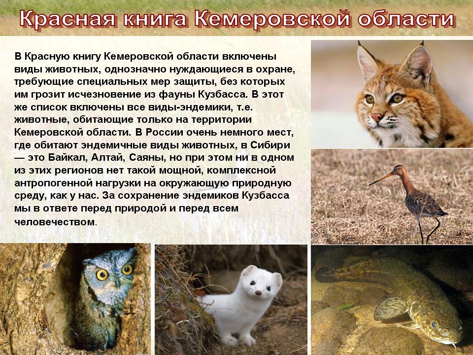 животные в красной книге и почему фото